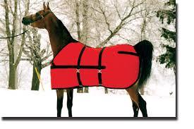 paardendekenwasserij-1